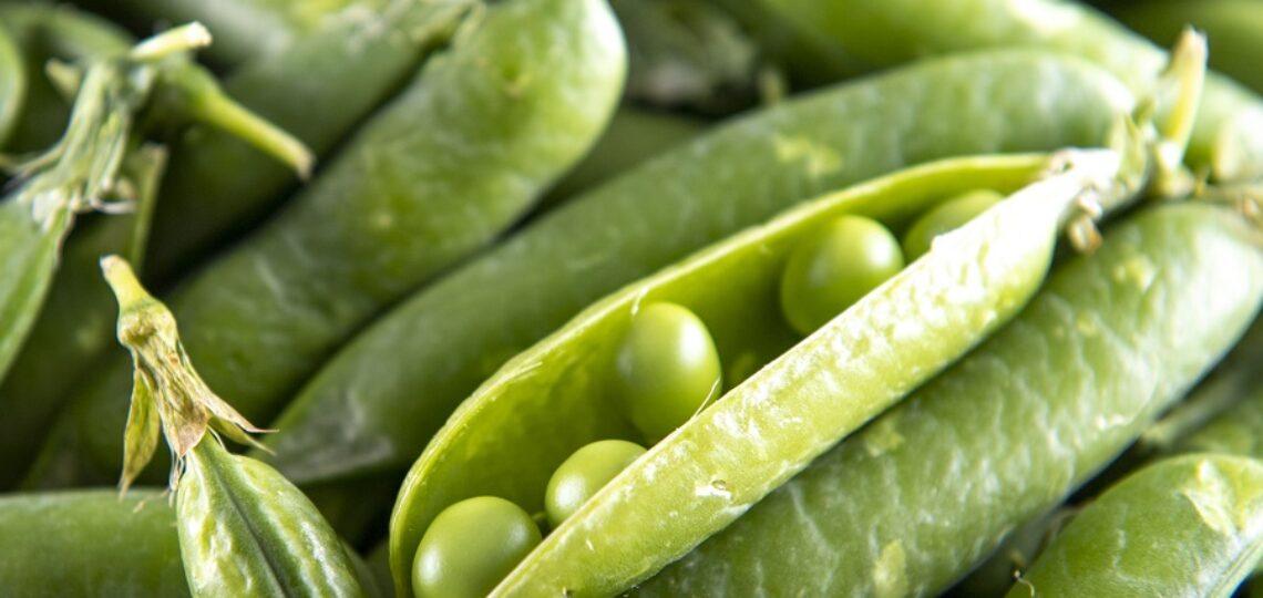 British Garden Peas